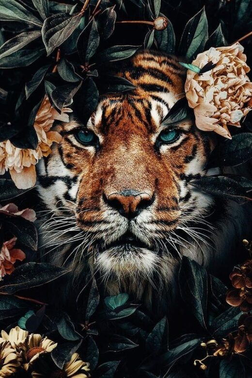Tiger in the colors of a python.