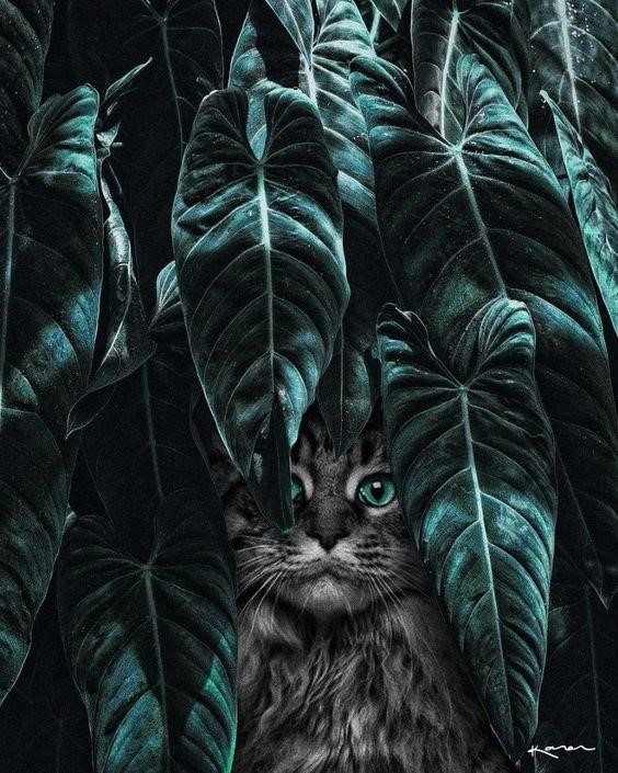 A cat in the leaves.