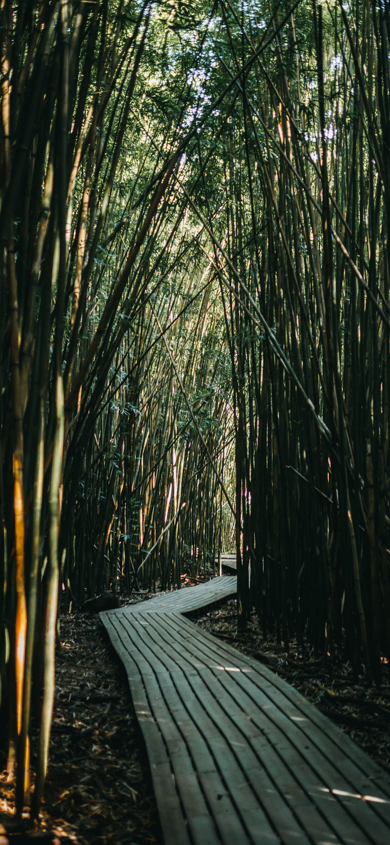 iPhone wallpapers bamboo forest hana usa Bamboo forest